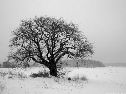 Black and white photograph of a lone tree in winter.
